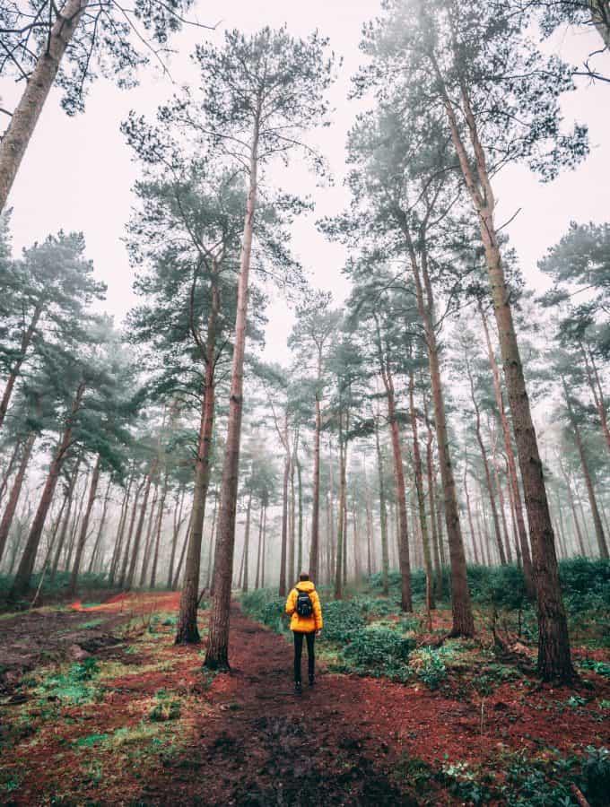 hombre caminando en el bosque
